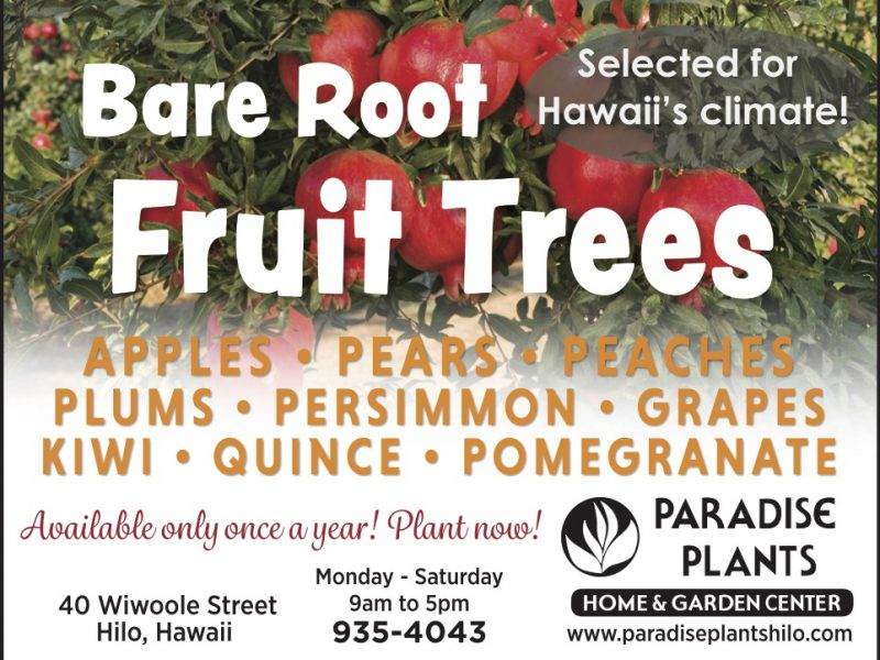 Bare Root Fruit Trees 2021